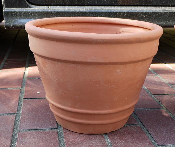10号サイズのテラコッタ製植木鉢2個をケイヨーデイツーで買って来た2.jpg