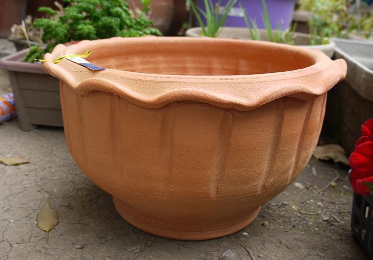 12号サイズ(36cm)のテラコッタの植木鉢を買ってきた1.jpg