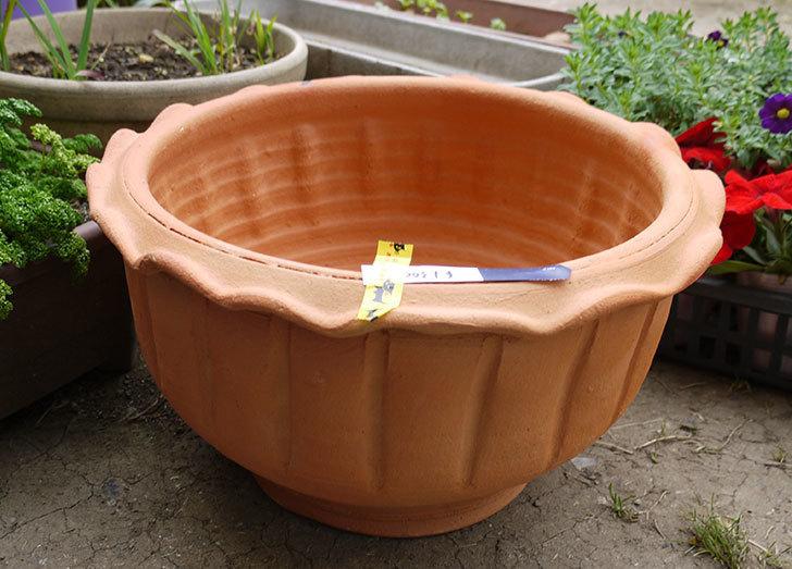 12号サイズ(36cm)のテラコッタの植木鉢を買ってきた2.jpg