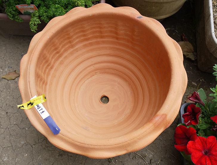 12号サイズ(36cm)のテラコッタの植木鉢を買ってきた3.jpg
