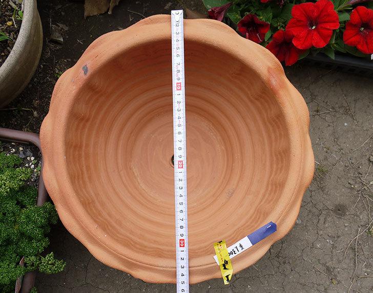 12号サイズ(36cm)のテラコッタの植木鉢を買ってきた4.jpg