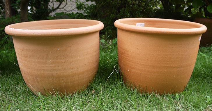 14号サイズのテラコッタ鉢-540086-LL-(43)買った1.jpg