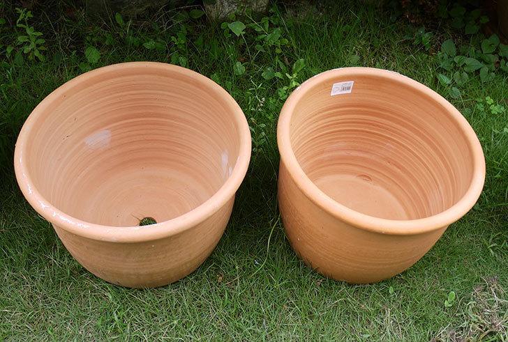14号サイズのテラコッタ鉢-540086-LL-(43)買った2.jpg