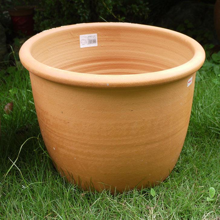 14号サイズのテラコッタ鉢-540086-LL-(43)買った3.jpg