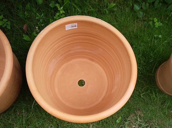 14号サイズのテラコッタ鉢-540086-LL-(43)買った4.jpg