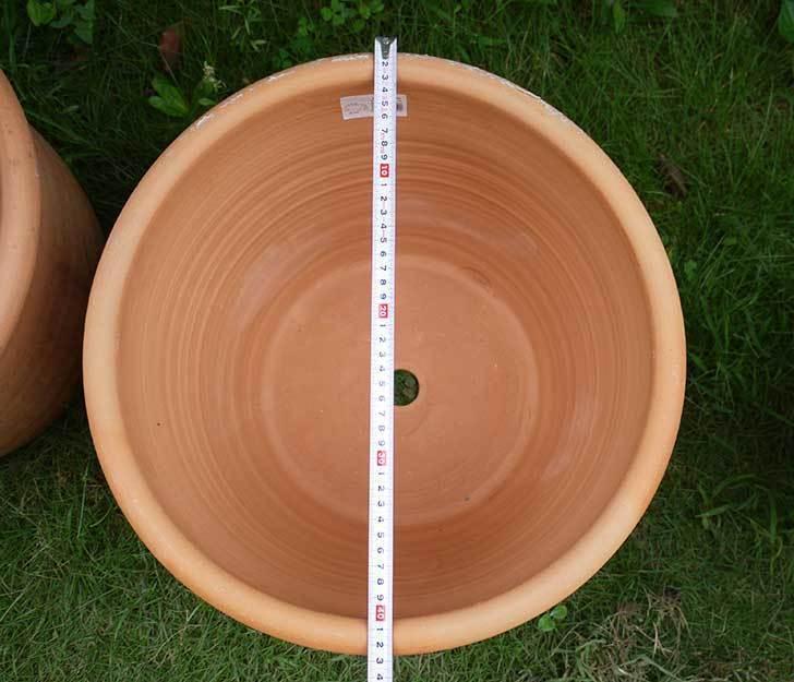 14号サイズのテラコッタ鉢-540086-LL-(43)買った6.jpg