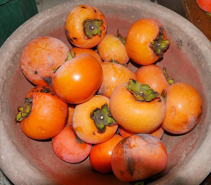 2回目の柿の収穫をした。2017年-1.jpg