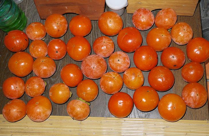 3回目の柿の収穫をした7.jpg