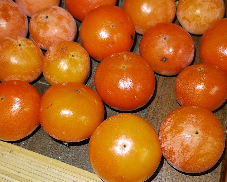 3回目の柿の収穫をした8.jpg