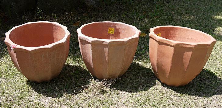 9号サイズのテラコッタ鉢がホームズで500円だったので3個買って来た1.jpg