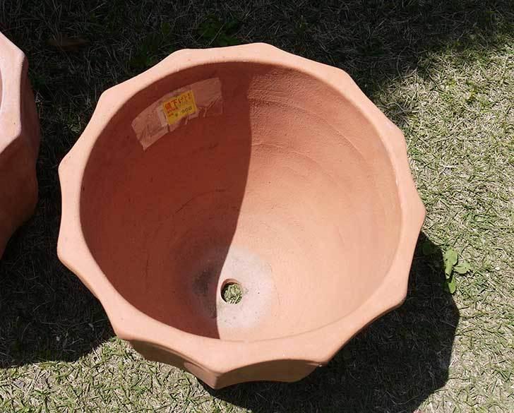 9号サイズのテラコッタ鉢がホームズで500円だったので3個買って来た3.jpg