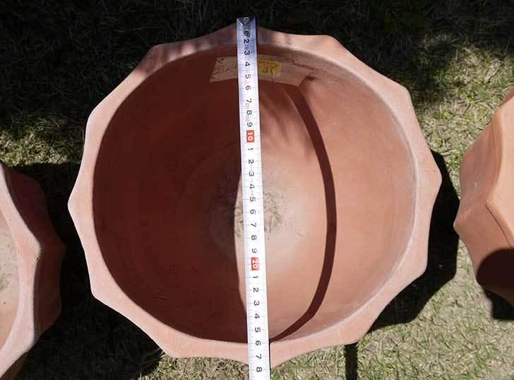 9号サイズのテラコッタ鉢がホームズで500円だったので3個買って来た4.jpg