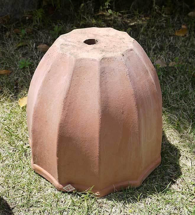 9号サイズのテラコッタ鉢がホームズで500円だったので3個買って来た6.jpg