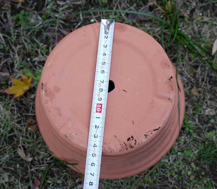 9号サイズの素焼鉢-M-ハイタイプをケイヨーデイツーで買って来た6.jpg