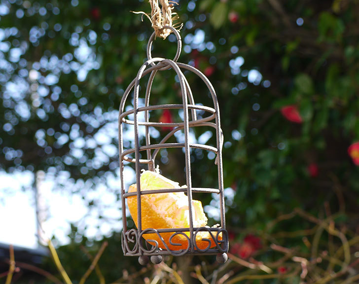 Antiqui-Birdhouse-アンティークバードハウスを設置した1.jpg
