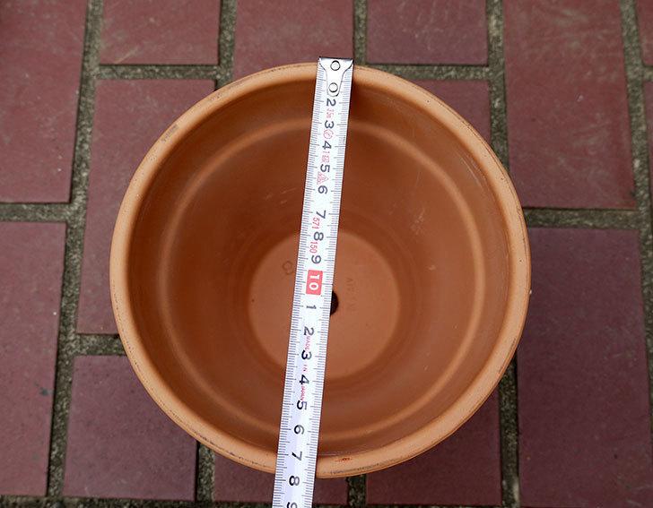 DEROMA-トールポット(0D-18WSZ-vaso-alto)-18cm-(6号)をケイヨーデイツーで買って来た6.jpg