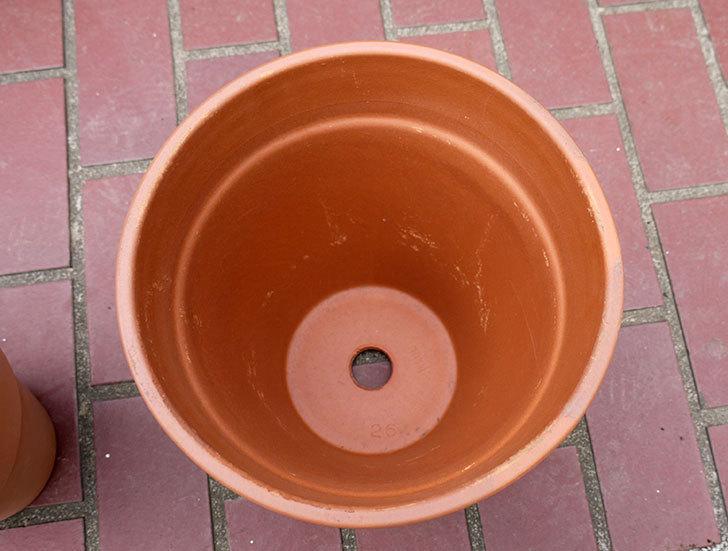 DEROMA-トールポット(0D-vaso-alto)-26cm-(8号)をケイヨーデイツーで買って来た2.jpg