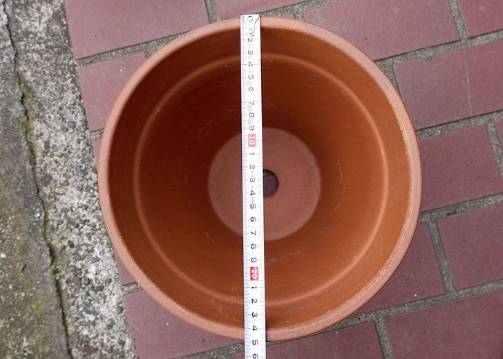 DEROMA-トールポット(0D-vaso-alto)-26cm-(8号)をケイヨーデイツーで買って来た5.jpg