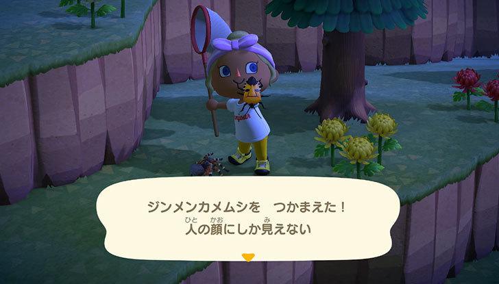 あつまれ-どうぶつの森7-8.jpg