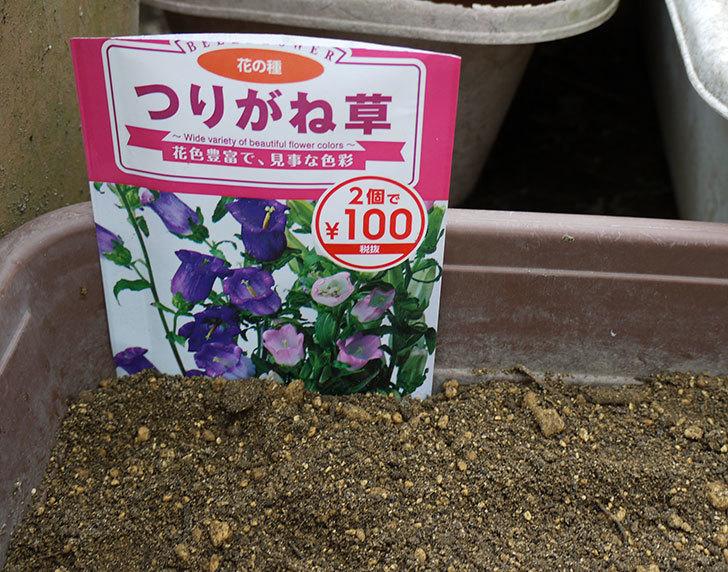 つりがね草(カンパニュラ)のタネを蒔いた。2016年-1.jpg