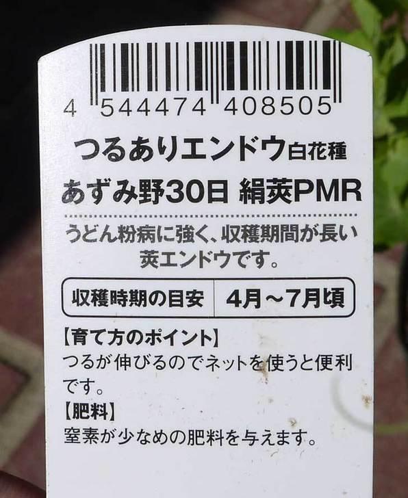つるありエンドウ白花種の苗をケイヨーデイツーで3個買ってきた5.jpg