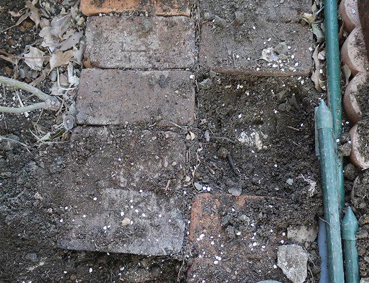 つるアイスバーグ(ツルバラ)に寒肥を施した。2019年-7.jpg