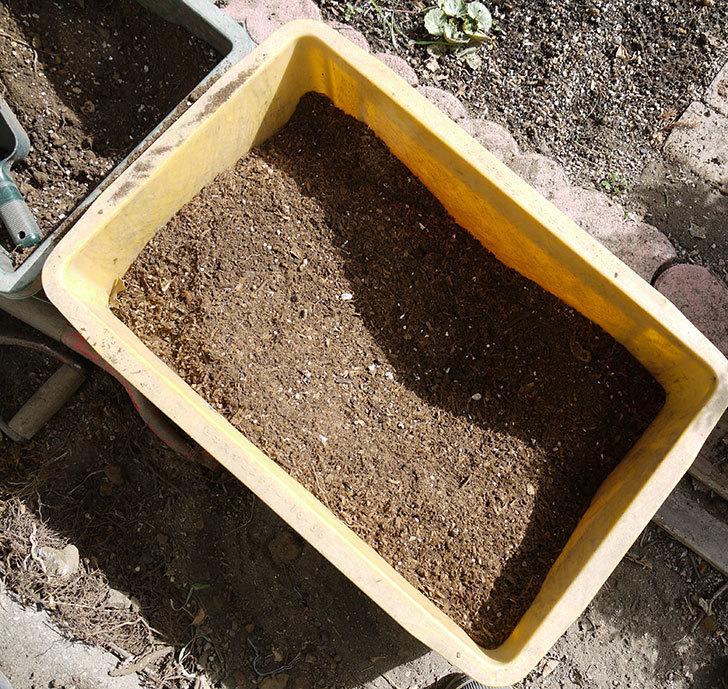 つるジュリア(ツルバラ)に穴を掘って寒肥をやった。2017年-6.jpg