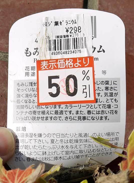 もみじ葉ゼラニウムがケイヨーデイツーで半額だったので買って来た3.jpg