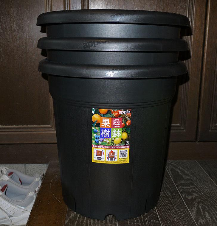 アップルウェアー-果樹鉢-365型-ブラックを3個買った1.jpg