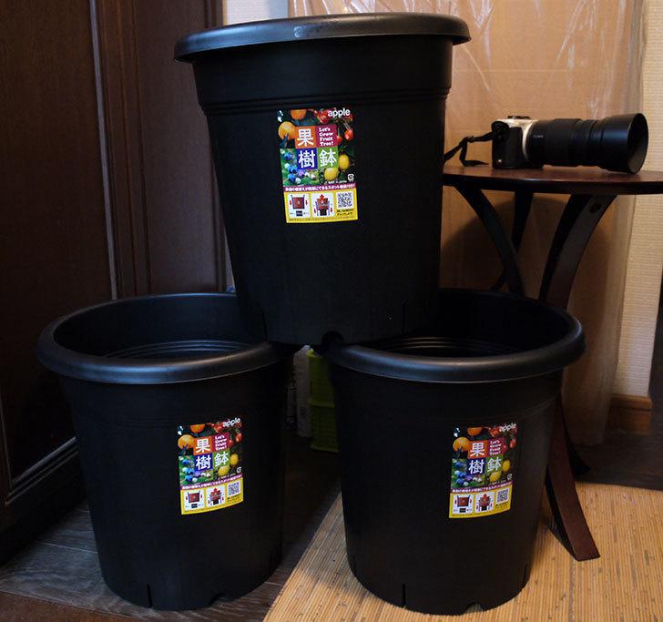 アップルウェアー-果樹鉢-365型-ブラックを3個買った2.jpg