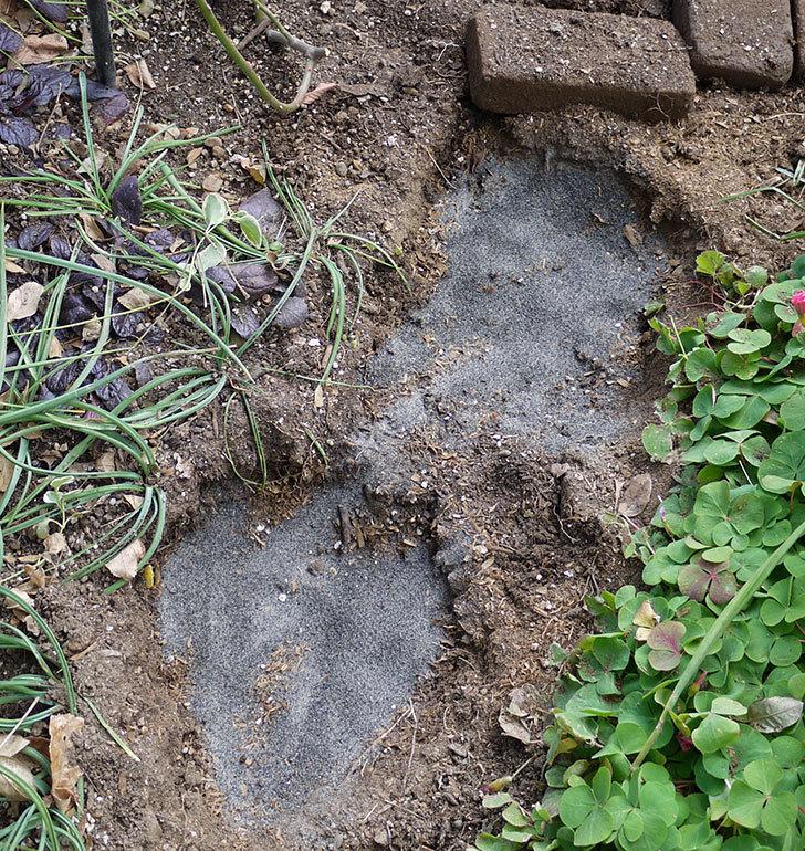 アンジェラ(ツルバラ)に穴を掘って寒肥をやった。2017年-12.jpg