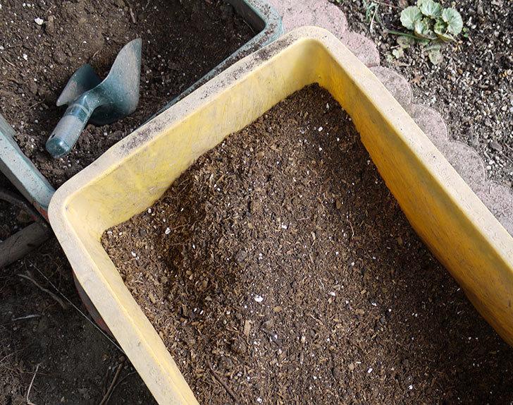 アンジェラ(ツルバラ)に穴を掘って寒肥をやった。2017年-7.jpg