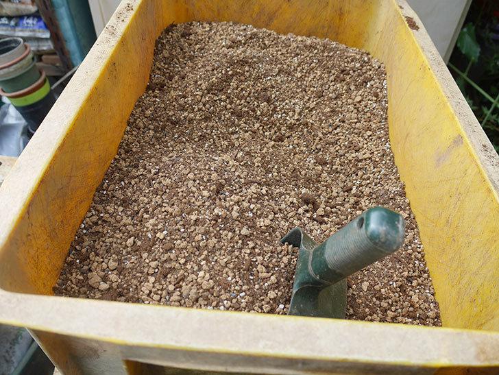 アントニオ・ガウディ(半ツルバラ)の大苗を8号ロングスリット鉢に植えた。2019年-2.jpg