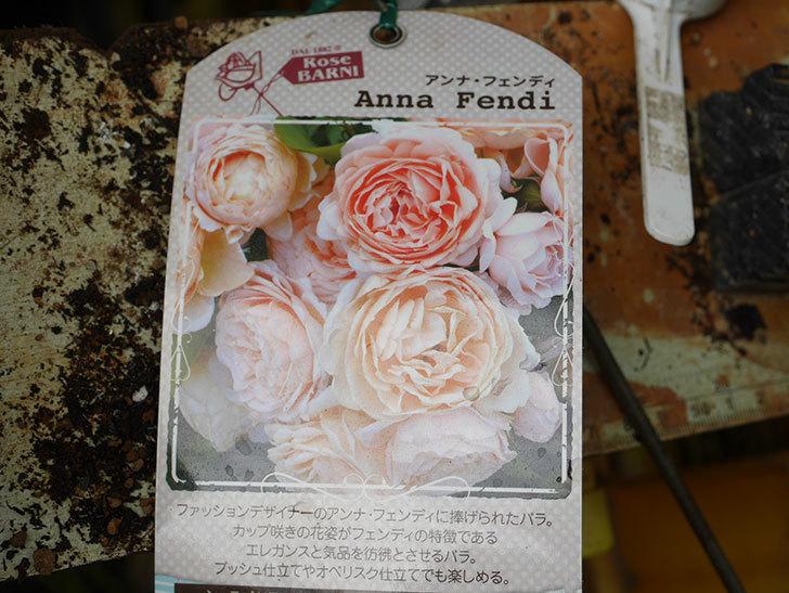 アンナ・フェンディ(Anna Fendi)の新苗を6号ロングスリット鉢に植え換えた。2020年-002.jpg