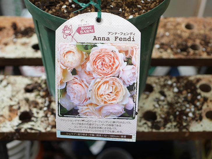 アンナ・フェンディ(Anna Fendi)の新苗を6号ロングスリット鉢に植え換えた。2020年-007.jpg