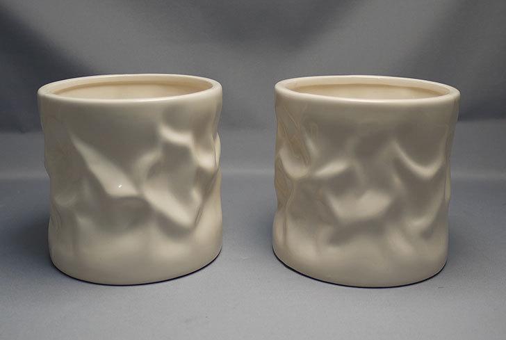 アート植木鉢-花盆-洋陶器植木鉢43(クリーム色)を2個買って来た1.jpg