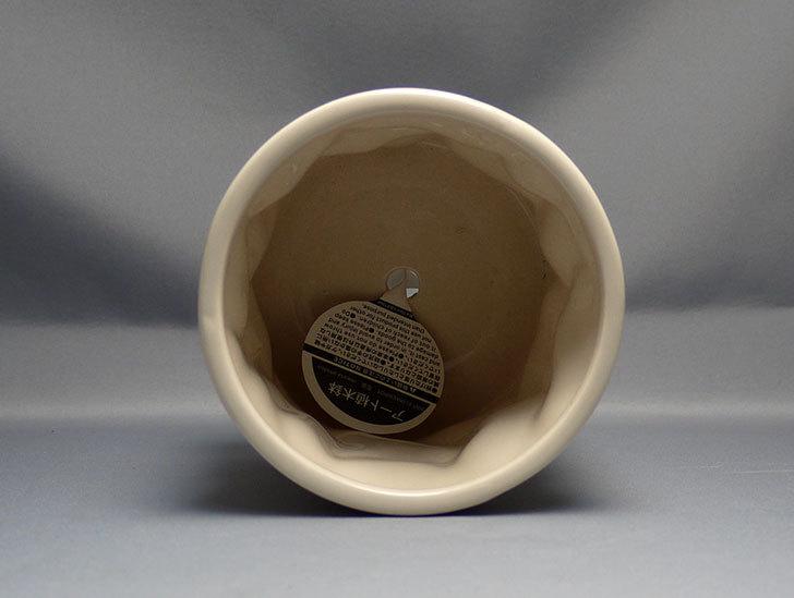 アート植木鉢-花盆-洋陶器植木鉢43(クリーム色)を2個買って来た4.jpg