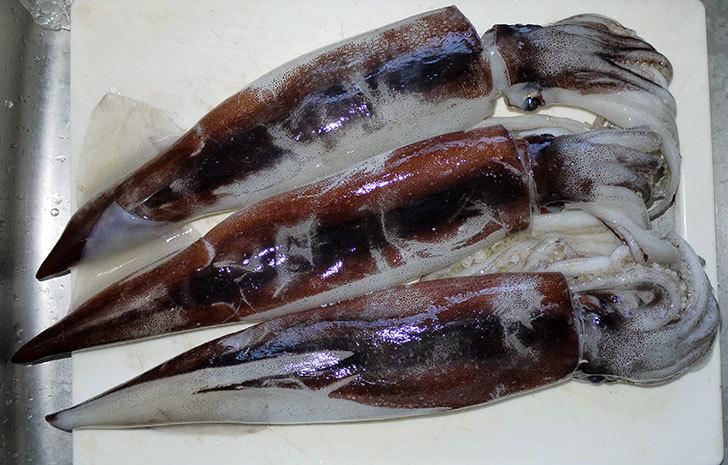 イカを3匹買ってきた1.jpg