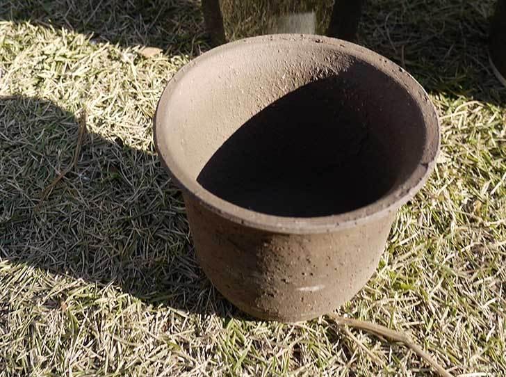 ウチョウラン-鉢-3.5号をケイヨーデイツーで買って来た2.jpg