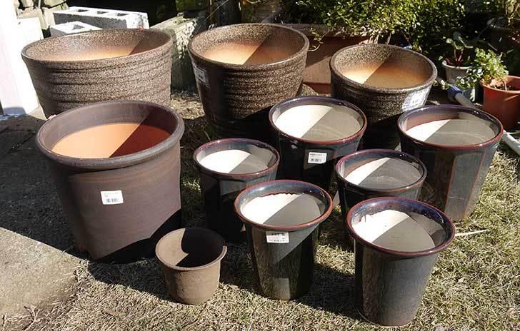 ウチョウラン-鉢-3.5号をケイヨーデイツーで買って来た6.jpg