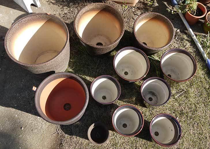 ウチョウラン-鉢-3.5号をケイヨーデイツーで買って来た7.jpg