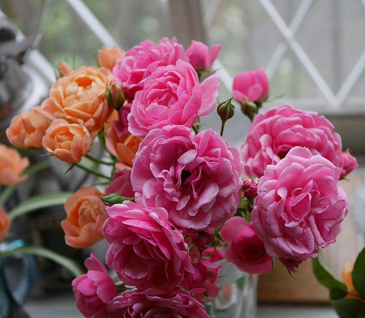 エドゥアール・マネ(半ツルバラ)の花が咲いた。2019年-10.jpg