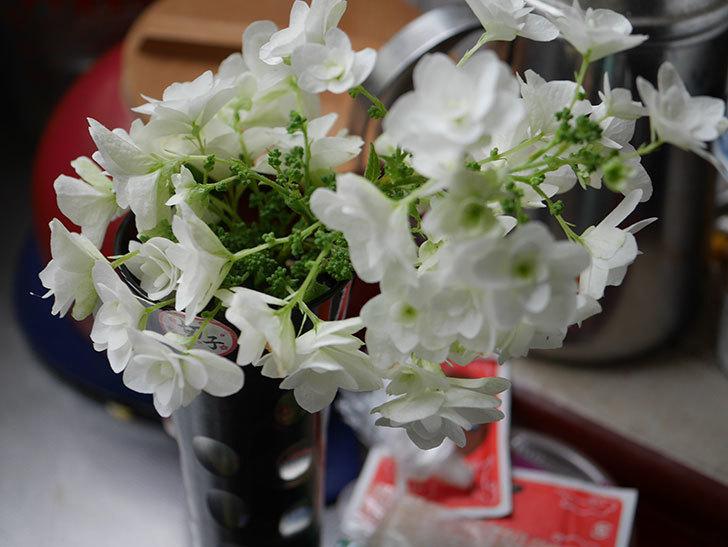 エドゥアール・マネ(半ツルバラ)の花が咲いた。2019年-16.jpg