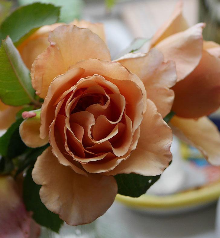 エドゥアール・マネ(半ツルバラ)の花が咲いた。2019年-18.jpg