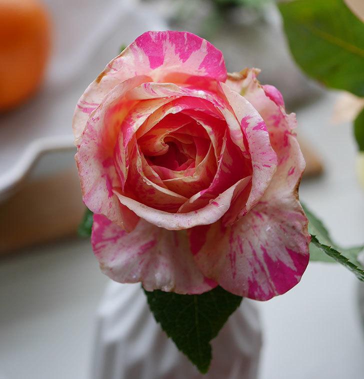 エドゥアール・マネ(半ツルバラ)の花が咲いた。2019年-7.jpg