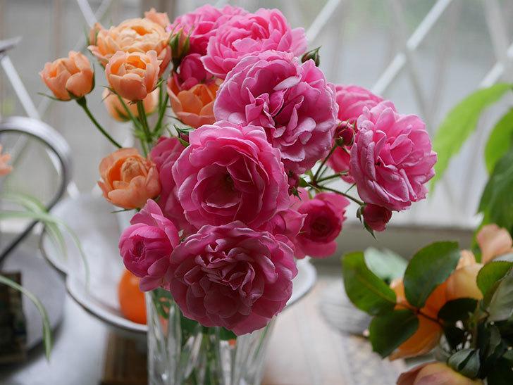 エドゥアール・マネ(半ツルバラ)の花が咲いた。2019年-9.jpg