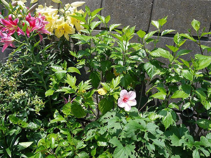 エラブの春に今年最初の花が咲いた。2017年-4.jpg