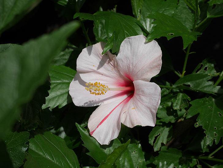 エラブの春に今年最初の花が咲いた。2020年-007.jpg
