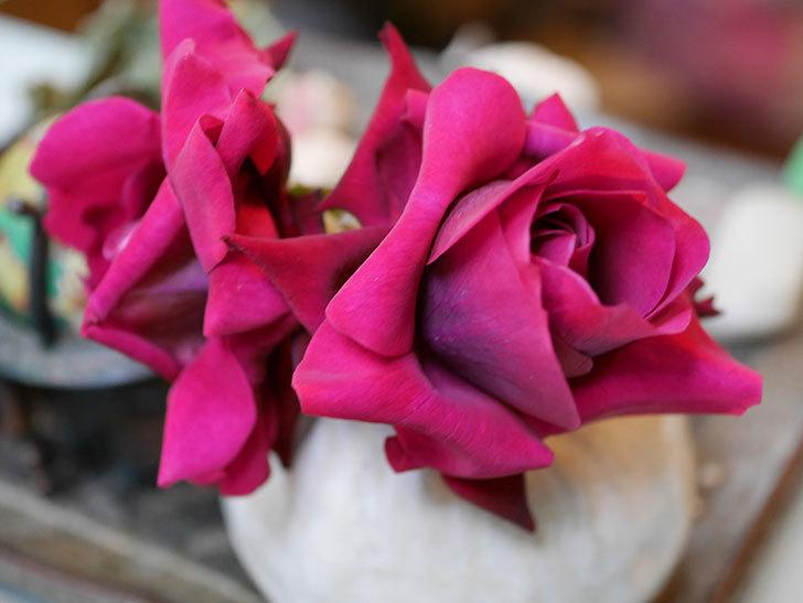 オデュッセイア(Odysseia)の新苗の秋花を切り花にした。半ツルバラ。2020年-001.jpg