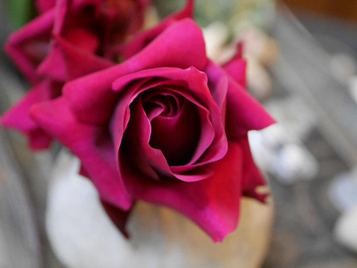 オデュッセイア(Odysseia)の新苗の秋花を切り花にした。半ツルバラ。2020年-002.jpg